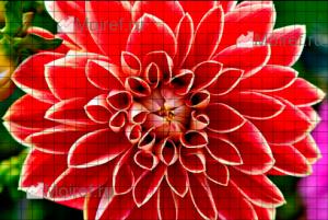 картинка серки игры Grid